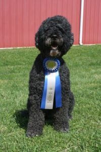 Skipper displaying his Rally Advanced Title Ribbon at the Mason and Dixon Kennel Club Trial on March 31, 2012.